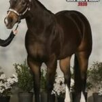 An Heiress To Gold, ABRA & APHA Mare