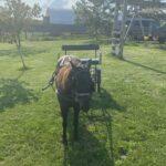 Bella, Mare Pony
