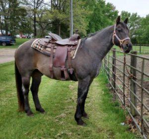 blue-roan-gelding