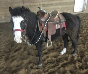brugman-pony
