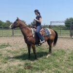 Buddy, Quarter Horse Gelding