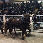 horse-012