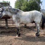 Stallion (Not for Sale)