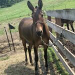 Maggie, Molly Mule