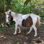 mini-mare-pony-2