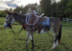 paint-mule