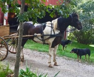 pete-in-carriage