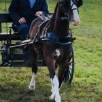 pony-1
