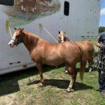 Mare Pony