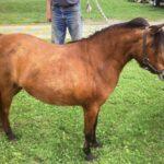 Mini Mare Pony